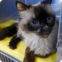 Adopt A Pet :: C-70137 Thomas - Westampton, NJ