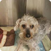 Adopt A Pet :: Riley - Lorain, OH