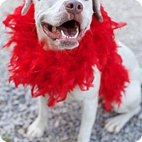 Adopt A Pet :: Jade ($200 adoption fee) - Harrisonburg, VA