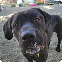 Adopt A Pet :: Osiris - Lorain, OH
