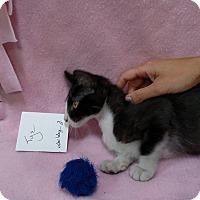 Adopt A Pet :: Tye - Yuba City, CA