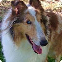 Adopt A Pet :: Rufus - Pueblo West, CO