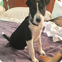 Adopt A Pet :: Cleo - Atlanta, GA