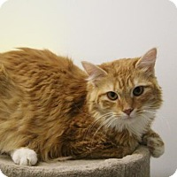 Domestic Mediumhair Cat for adoption in McKenzie, Tennessee - Cayenne
