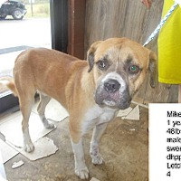 Adopt A Pet :: Mikey*FOSTER NEEDED!* - Chicago, IL