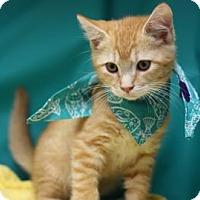 Adopt A Pet :: Felix - Voorhees, NJ