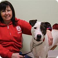 Adopt A Pet :: Panama - Elyria, OH