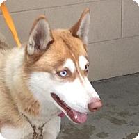 Adopt A Pet :: I1266723 - Pomona, CA