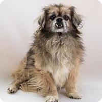 Adopt A Pet :: Arbok - Atlanta, GA