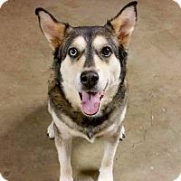 Adopt A Pet :: Angel - Sharon Center, OH