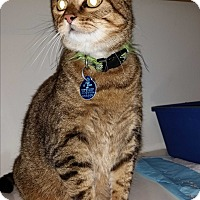 Adopt A Pet :: Libby - St. Louis, MO