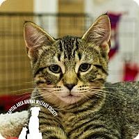 Adopt A Pet :: Damon - Baton Rouge, LA