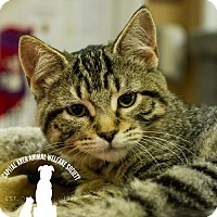 Adopt A Pet :: Caroline - Baton Rouge, LA