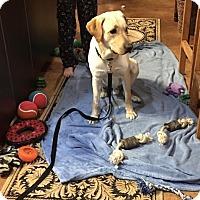 Adopt A Pet :: Zorak - Denton, TX