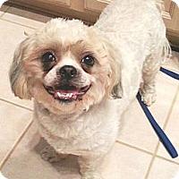Adopt A Pet :: Zoey - Orlando, FL