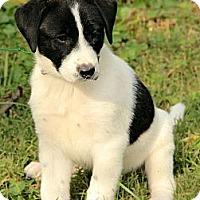 Adopt A Pet :: Jillian - Brattleboro, VT