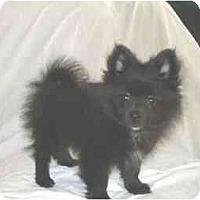 Adopt A Pet :: Bogie - Mooy, AL