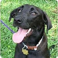 Adopt A Pet :: Zoe - Kingwood, TX