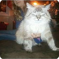 Adopt A Pet :: Mr. Whiskers - Murfreesboro, TN