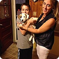 Adopt A Pet :: Brady - Shavertown, PA