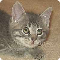 Adopt A Pet :: LUCY - 2013 - Hamilton, NJ