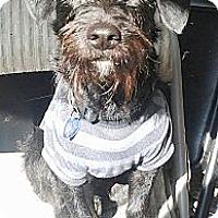 Adopt A Pet :: ROBBIE - Portland, OR