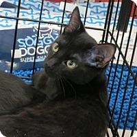 Adopt A Pet :: Beamer - Raritan, NJ