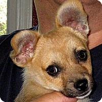 Adopt A Pet :: Baby Zucchini - Oakley, CA