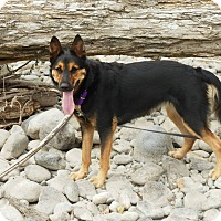 Adopt A Pet :: Coco - BC Wide, BC