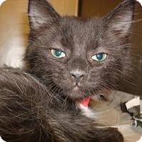 Adopt A Pet :: Nate - Miami, FL