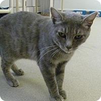 Adopt A Pet :: Gina - Hamburg, NY