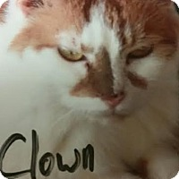 Adopt A Pet :: Clown - Camden, DE