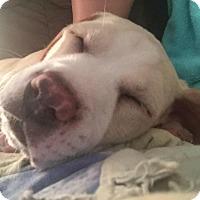 Adopt A Pet :: Lexie - Windermere, FL
