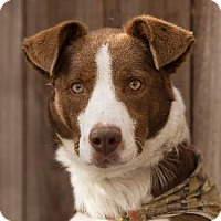 Adopt A Pet :: FAST EDDY - Pt. Richmond, CA