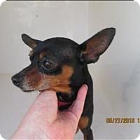Adopt A Pet :: 16-05-1550 Roscoe - Dallas, GA