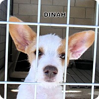 Adopt A Pet :: Dinah (Puppy) - Lindsay, CA