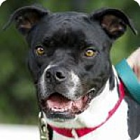 Adopt A Pet :: Frannie - Kettering, OH