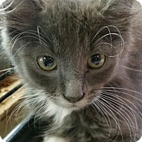 Adopt A Pet :: Whiskers - Williamston, NC