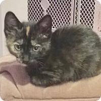 Adopt A Pet :: Dottie - Colmar, PA