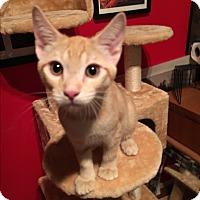 Adopt A Pet :: Target - Scottsdale, AZ