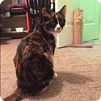 Adopt A Pet :: Olivia - Denver, NC