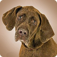Adopt A Pet :: Red - Prescott, AZ