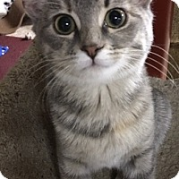 Adopt A Pet :: Dyna - Bloomsburg, PA