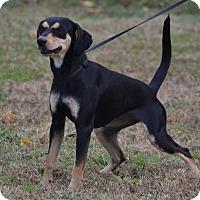 Adopt A Pet :: Charlotte - Lebanon, MO