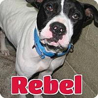 Adopt A Pet :: #2849 Rebel-VIDEO! - Lawrenceburg, KY