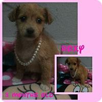 Adopt A Pet :: Roxy - LAKEWOOD, CA