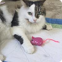 Adopt A Pet :: Angel T. - West Palm Beach, FL