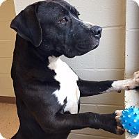 Adopt A Pet :: Hanson - McDonough, GA