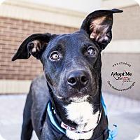 Adopt A Pet :: Captain - Mooresville, NC