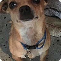 Adopt A Pet :: Papi - San Diego, CA
